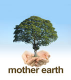 Look After Mother Earth. Female cupped hands on a clear blue sky background fading to white with a mature tree floating above hands and the words MOTHER EARTH royalty free stock image