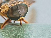 Look into My Eye's. Hundreds of eyes in one eye. Micro/macro of a horsefly and his eye. Nature up close Royalty Free Stock Photos