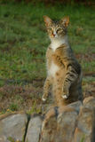 Look out. Cat standing on hind legs looking at wild birds on natural pond Stock Image