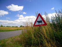 Look out for cows!. Cows crossing sign by a small country road Stock Photos