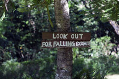 Look out for fallende Kokosnüsse Lizenzfreies Stockfoto