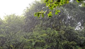 A look out on a rainfall. Massive rainfall with blurred trees as background royalty free stock photos