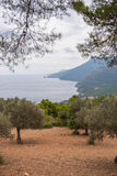 Look over an olive grove on the coast of Majorca Royalty Free Stock Photo