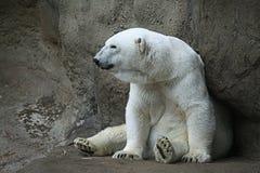 Look polar Fotos de Stock