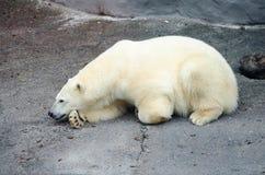 Look polar Imagen de archivo libre de regalías