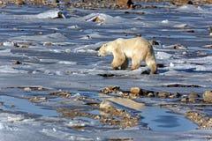 Look polar Fotos de archivo
