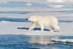 Look polar fotografía de archivo