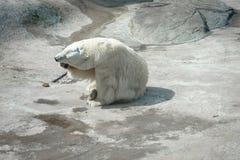 Look polare fotografia stock libera da diritti
