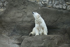 Look polare Immagini Stock
