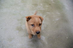 Look sharp dog Stock Image