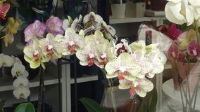 A look through the shop window on the orchids stock photography