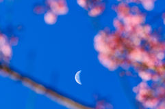 Look at the sky see the moon. In the cold Temperature with warm light, Look at the sky see the moon Stock Photography