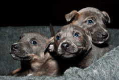 Look at these sweet puppies!. Three little and orphan puppies waits for love and a happy life Royalty Free Stock Images