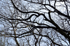 Look throught the branches of tree to the sky Royalty Free Stock Image