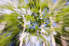 Look to the sky, trees in a forest. Stock Images