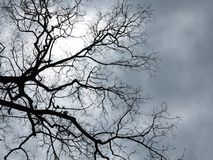 Free Look Up Royalty Free Stock Photo - 31446075