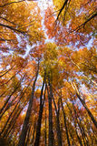 Look up in the autumn forest... Stock Image