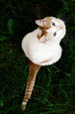 Look up! Fish here!. Small kitty with beautifil eyes looking up Royalty Free Stock Images