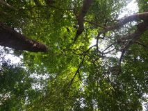 Look up in the forest royalty free stock photography
