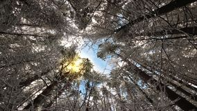 Look up at the magic treetops swaying in the winter wind. Loop with the sun, clouds, trees and snowfall stock footage