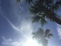 Look up. Open sky blue sky and palm trees Royalty Free Stock Photo
