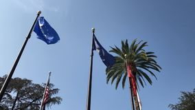 Look up at the Palm Tree and United States Navy flag. Los Angeles, California, United States stock footage