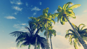 Look up at palm trees against blue cloudy sky. Palm trees on the blue cloudy sky background at daytime Stock Image