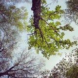 Look Up! Stock Photos