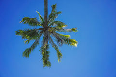 Look up. Shot of a coconut tree from lower point of view over a blue sky Royalty Free Stock Photography