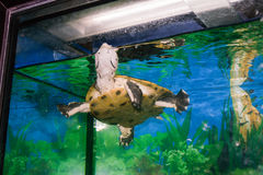 Look up in the swimming tortoise stock photo