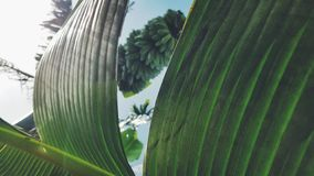 Banana field stock image