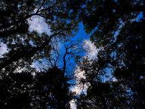 Look up to the sky through leaves and trees Stock Photo