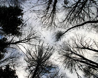 Look up to tree Royalty Free Stock Photo
