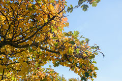look up to tree leaves Royalty Free Stock Image