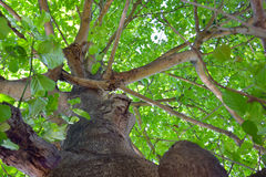 Look up the tree Royalty Free Stock Image
