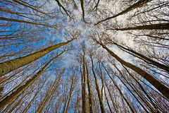 Look up into the treetops Royalty Free Stock Images