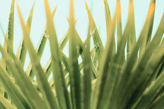 Look up under the palm leaves Stock Photography
