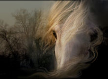 Look white horse. Sad look wise white horse fits the mood of nature Royalty Free Stock Photography