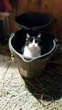 Look who is in the bucket! Royalty Free Stock Photography