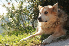 Look who's there?. A portrait of a dog enjoying the sun in a garden Stock Images