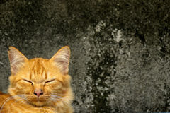 Lookalike uśmiechnięty kot Zdjęcia Stock
