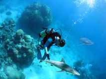 LookdownDiver. Divers being circled by sharks Stock Photos