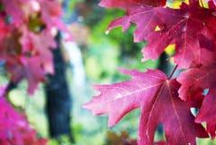 : Lookg tramite le foglie fotografie stock libere da diritti