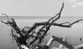 Looking across the ocean toward the horizon, with branches of driftwood in the foreground, in black & white, Fire Island stock image