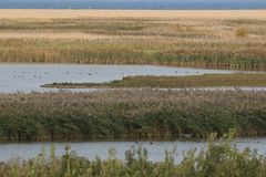 Salt marshes at Cley royalty free stock images