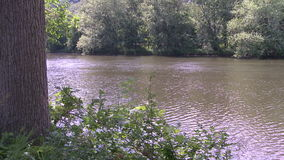 Looking across a tree lined river from one bank to the other. A view or scene of woods stock video