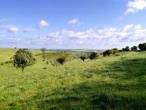 Looking across trees on hillside, Yorkshire Stock Image