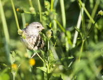Looking around amongst weeds Royalty Free Stock Photography