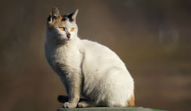 Looking back. The close-up of a short-hair cat Stock Image