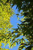 Looking Through the Bamboo. In Alvarado, Texas royalty free stock image